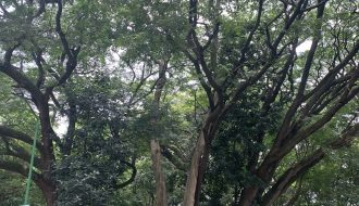 Tree of life, growth
